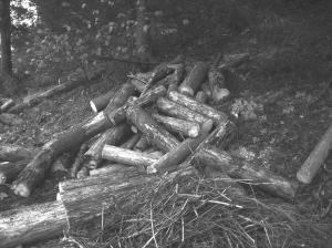 il legname